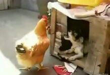 σκυλος κοτα σκυλοσπιτο