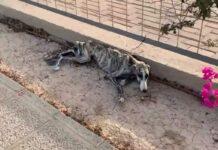 σκελετωμένος σκύλος