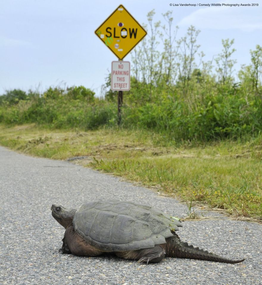 Snarling Snappin In The Slow Lane