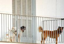 σκυλιά στην βεράντα