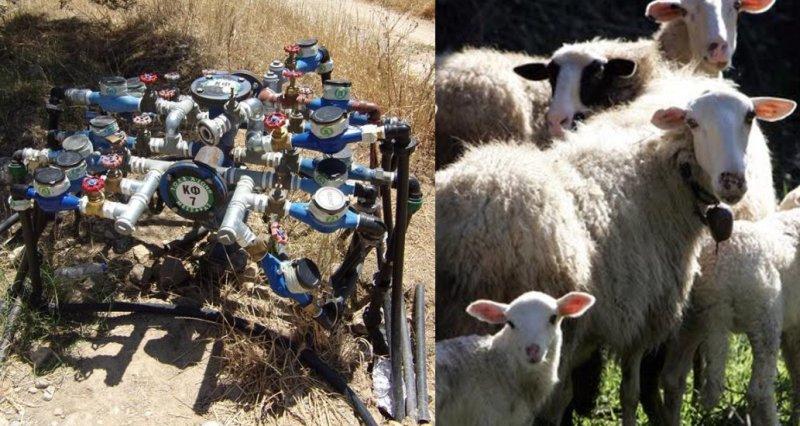 υδρόμετρα πρόβατα