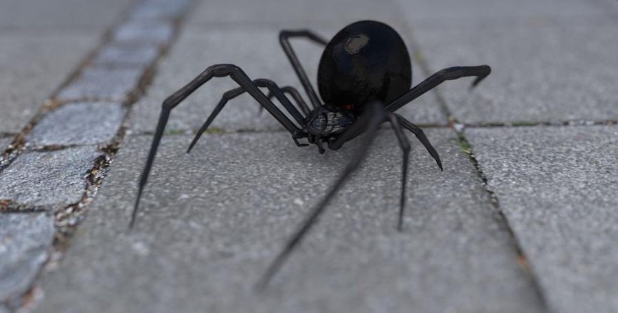 μαύρη αράχνη
