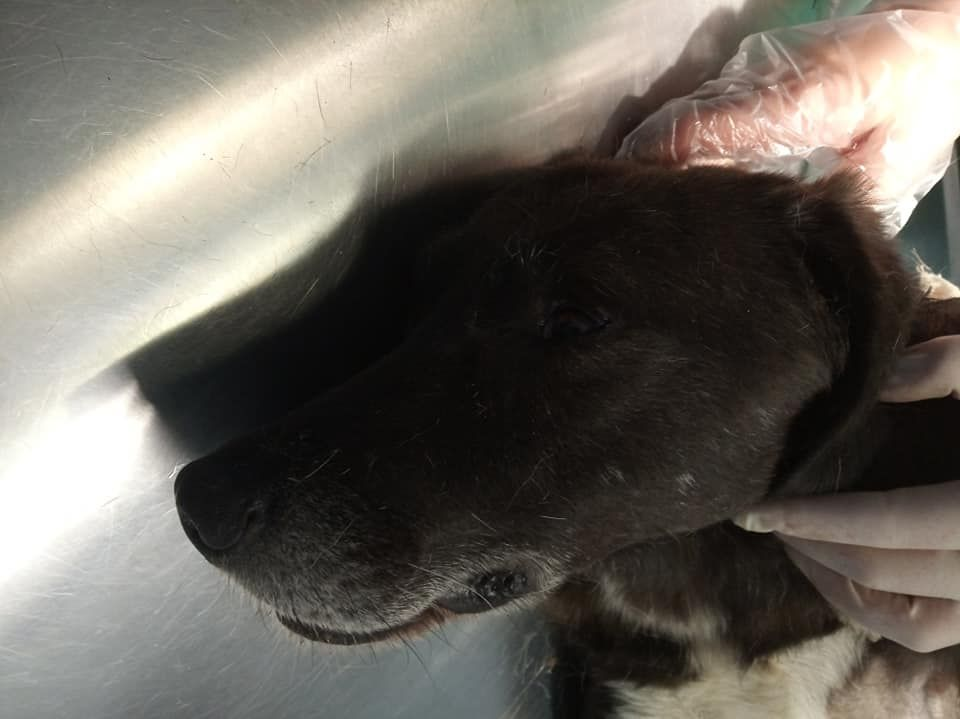 Μαχαίρωσαν ξανά σκύλο! Τον έσωσε στρατιωτικός στην Αλεξανδρούπολη